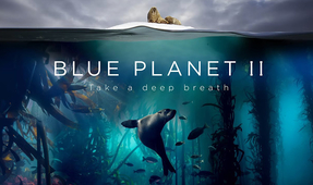 BBC's Blue Planet II Premiering in US and Canada on January 20
