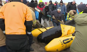 Volunteers Brave Subzero Temps to Rescue Whale
