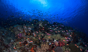 Coral Reefs in Asia Pacific Infected with New Virus from Plastics
