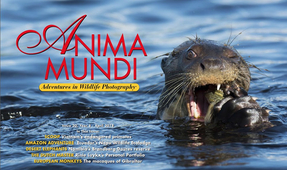 New Issue of Anima Mundi Magazine Published