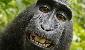 Monkey Selfie Lawsuit Ends