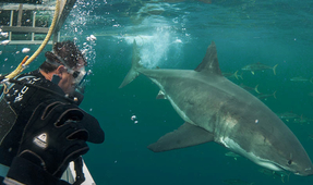 New Zealand Shark Cage Diving Faces Reform