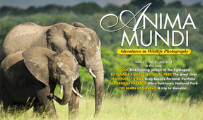 New Issue of Anima Mundi Magazine Available