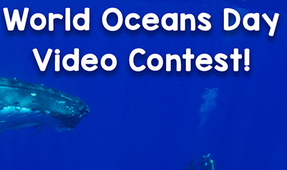 One World One Ocean World Oceans Day Video Contest