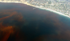 Red Tide State of Emergency in Florida