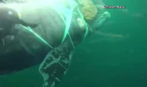 Video: Chilean Navy Rescues Whale