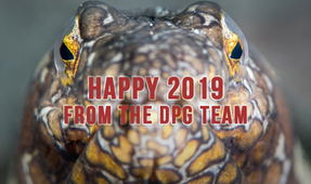 Happy New Year from DPG!