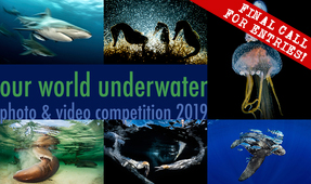 Our World Underwater 2019 – Final Call for Entries!