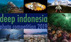 DEEP Indonesia 2019 – Deadline One Week Away!