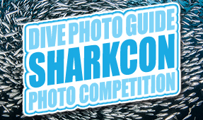 First DPG-SharkCon Photo Competition Opens