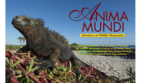 ANIMA MUNDI: Issue 35 Now Available