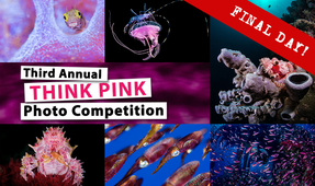 Third Think Pink Photo Competition: Final Day!
