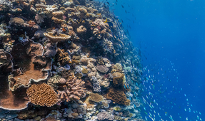 Great Barrier Reef Authority Calls for Urgent Action on Climate Change