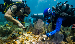 NOAA Grant Recommended to Coral Restoration Foundation Will Support Ongoing Restoration Efforts in the Florida Keys