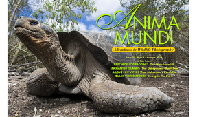 ANIMA MUNDI: Issue 36 Now Available