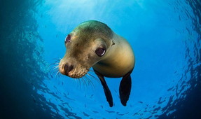 Free Webinar on Underwater and Wildlife Photography