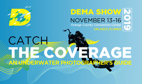 An Underwater Photographer's Guide to DEMA 2019