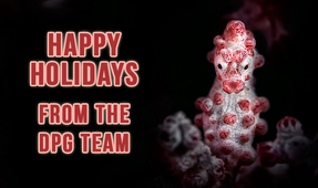 Happy Holidays from DPG
