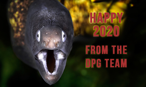 Happy New Year from DPG