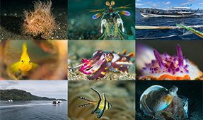 Announcing the Lembeh vs Anilao Shootout 2020