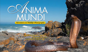 ANIMA MUNDI: Issue 38 Now Available