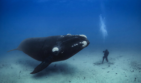 "Nikon ""Creators Hour"": A Deep Dive with Brian Skerry"