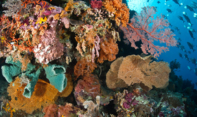 Study: Strong Link Between Rich Biodiversity and Reef Health