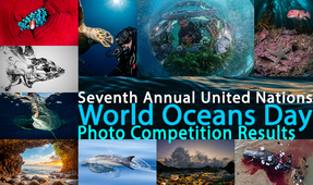 Announcing the Winners of the Seventh United Nations World Oceans Day Photo Contest