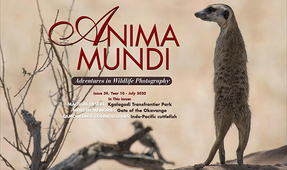 ANIMA MUNDI: Issue 39 Now Available