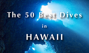 New Book by Tim Rock and David Fleetham: 50 Best Dives in Hawaii