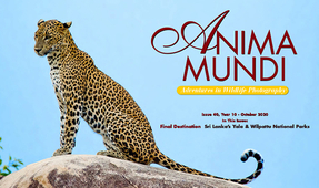 Final Issue of ANIMA MUNDI Published