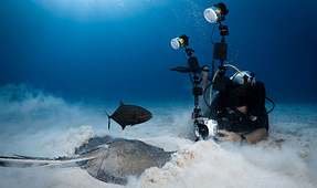 Backscatter Publishes How-To Article on Shooting Little Cayman's Stingrays