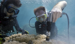 "Iconic Reefs Suffering Coral ""Osteoporosis"" Due to Ocean Acidification"