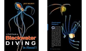 New Book by Jeff Milisen: A Field Guide to Blackwater Diving in Hawaii