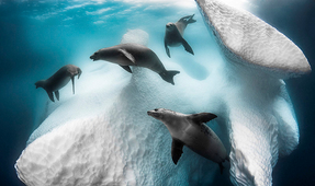 Underwater Photographer of the Year 2021 Open for Entries