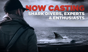 Shark Enthusiasts Wanted for New U.S. TV Show