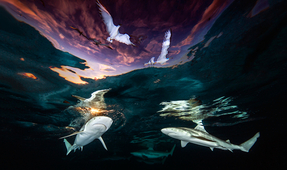 Underwater Photographer of the Year 2021 Results Announced