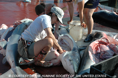 Star Island Montauk Shark Tournament - Humane Society of United States