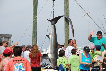 Oak Bluffs Shark Tournament Weigh In