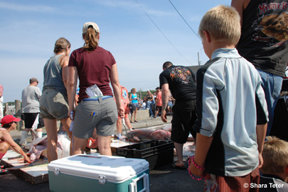 Oak Bluffs Shark Tournament Kids