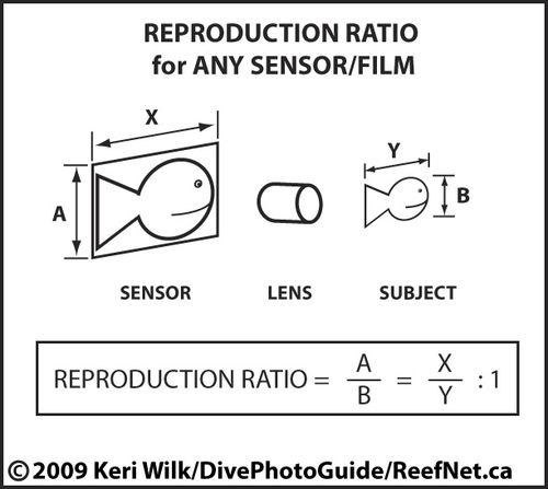 Reproduction Ratio