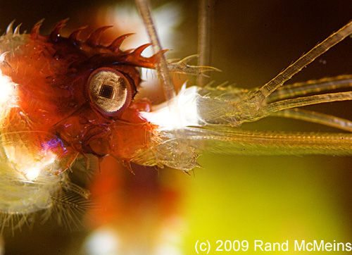 Underwater Photography Super Macro - Rand McMeins
