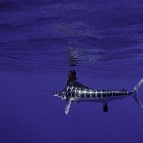 Underwater Photographer Peter G Allinson's Gallery ...