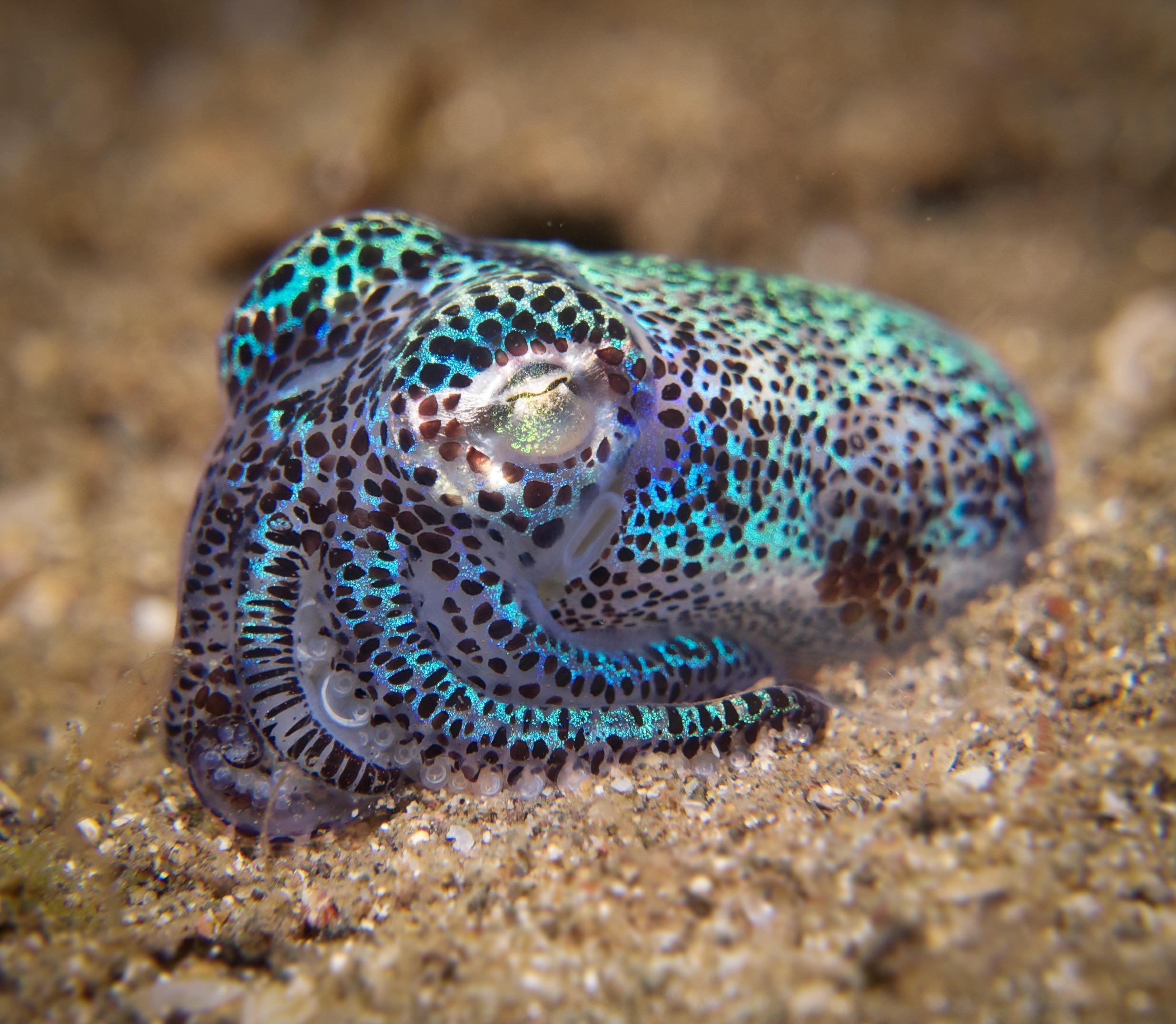 Underwater Photographer Nish Shah's Gallery: Muploads ...