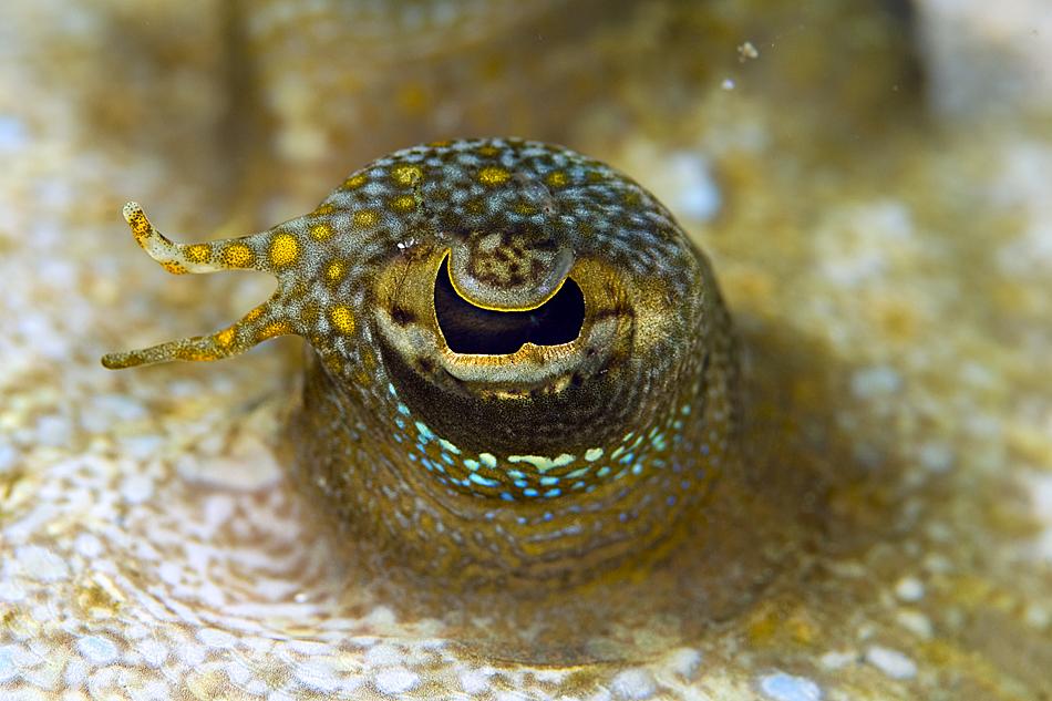 Underwater Photographer Francesco Ricciardi's Gallery ...   950 x 633 jpeg 558kB