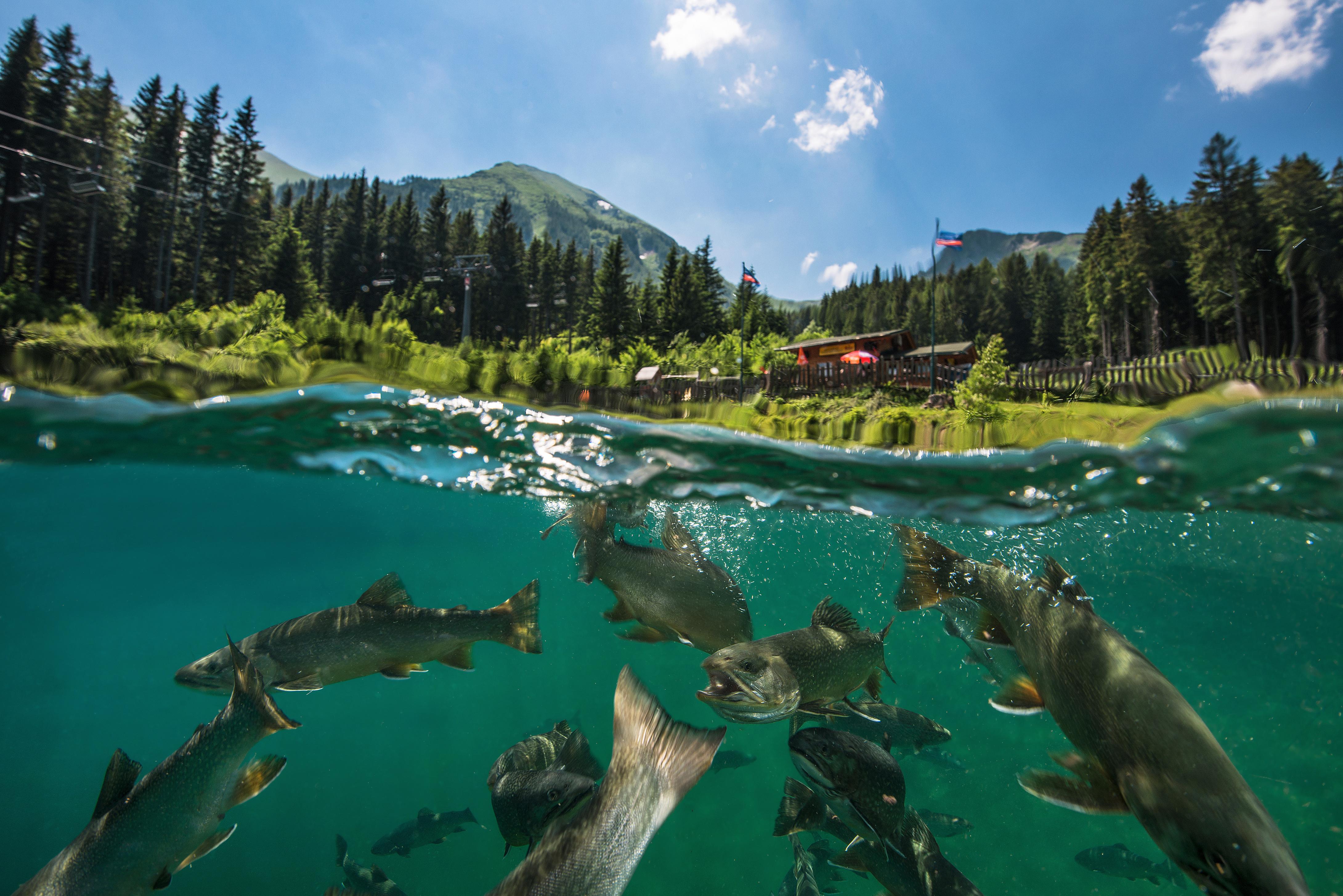 Underwater Photographer Michael Weberberger's Gallery ...