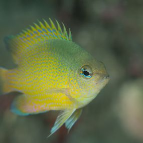 Photographing Reef Fish