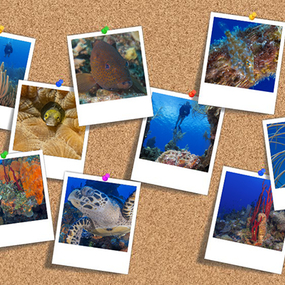Organizing Your Underwater Image Library