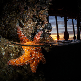 Shore Diving Underwater Photography
