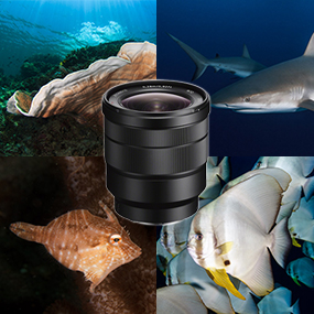 Selecting Lenses for Underwater Photography